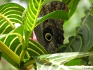 Motýlí farma